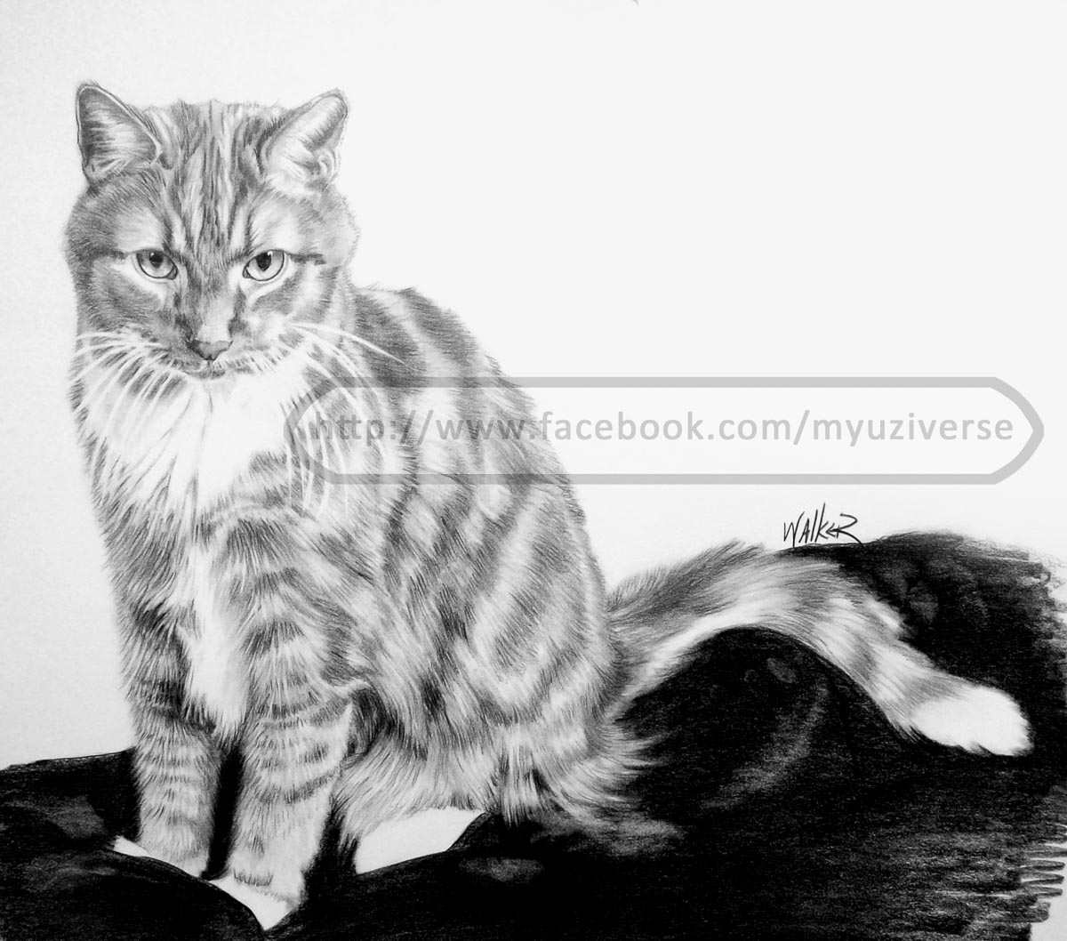 Denny's Cat | Animal Pet Portrait by M.L. Walker | Myuzing