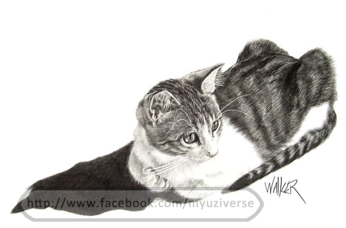 Mitzi | Animal Drawings by M.L. Walker | Myuzing