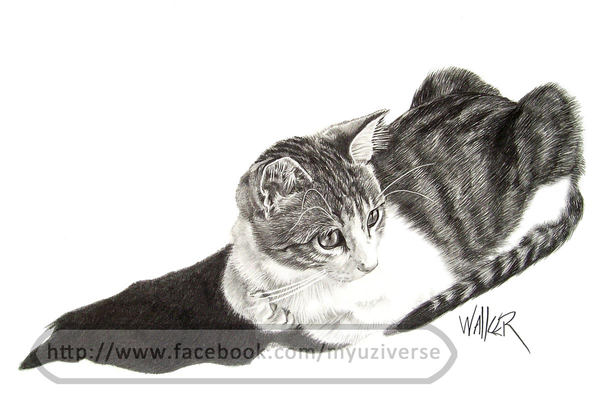 Mitzi | Animal Drawings by M.L. Walker | Myuzing