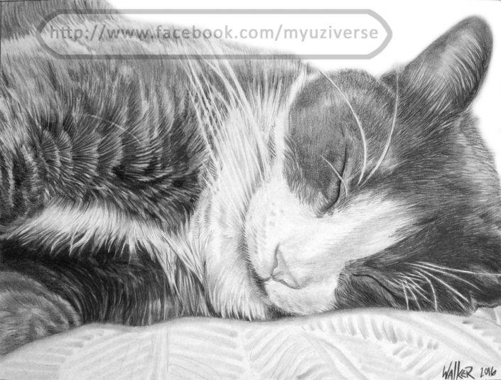 Peena | Animal Drawings by M.L. Walker | Myuzing