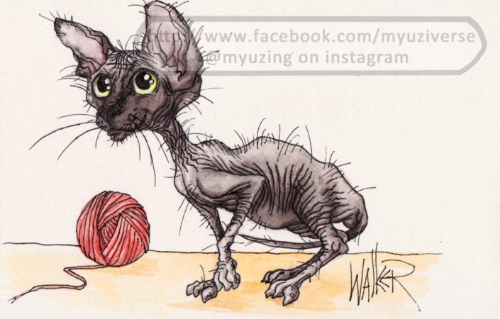 Sphinx Kitten | Animals by M.L. Walker | Myuzing
