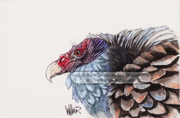 Vulture | Animals by M.L. Walker | Myuzing
